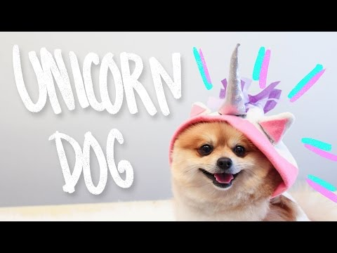 DIY Unicorn Dog Clothes – Hello Dudettes – YouTube