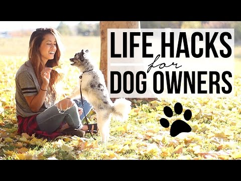 15 Life Hacks for Dog Owners!